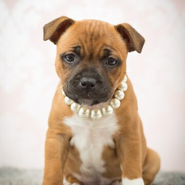 Stafford puppy with pearls by Penel