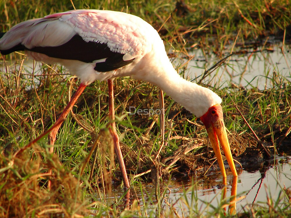 Stork by Despot
