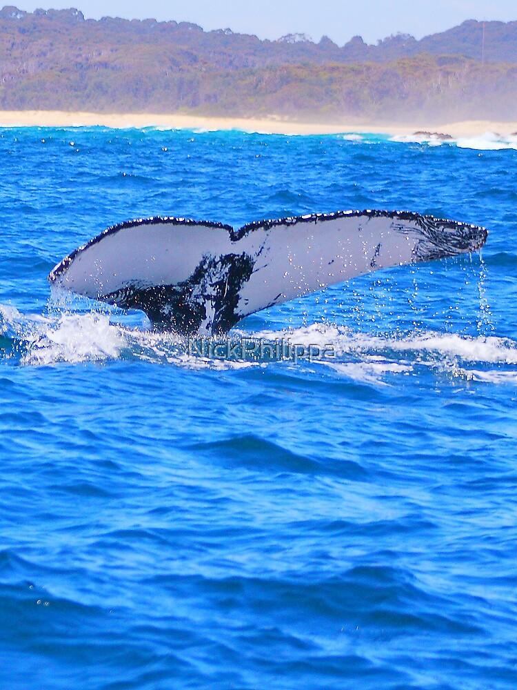 Whale Tail by NickPhilippa