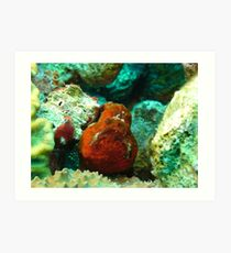 Frogfish Bonaire Art Print