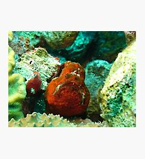 Frogfish Bonaire Photographic Print