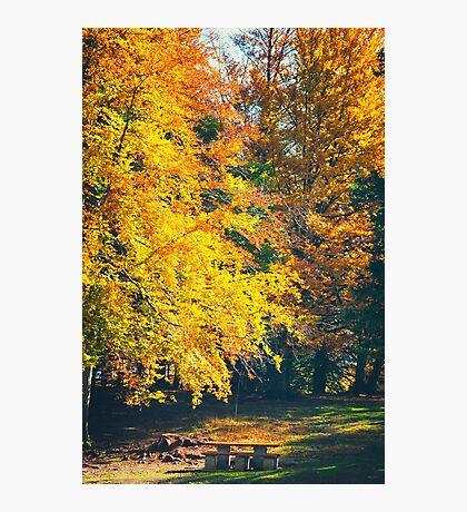 Table and benches in the autumnal wood Photographic Print