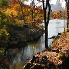 fall in central park by marianne troia