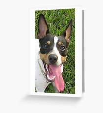 rat terrier second Greeting Card