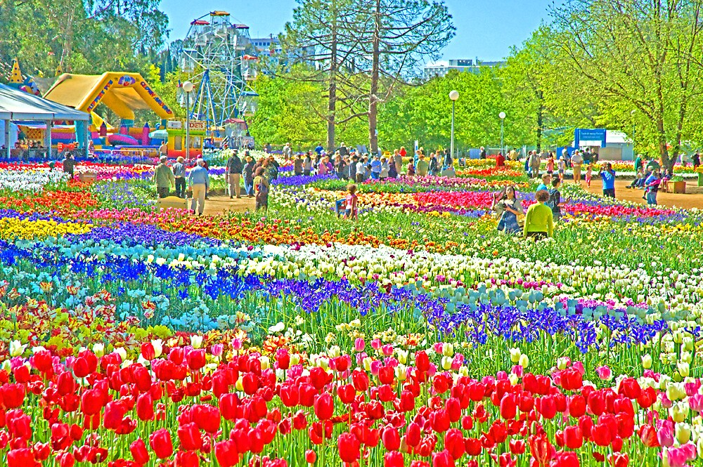 Tulip Gardens Canberra by satwant