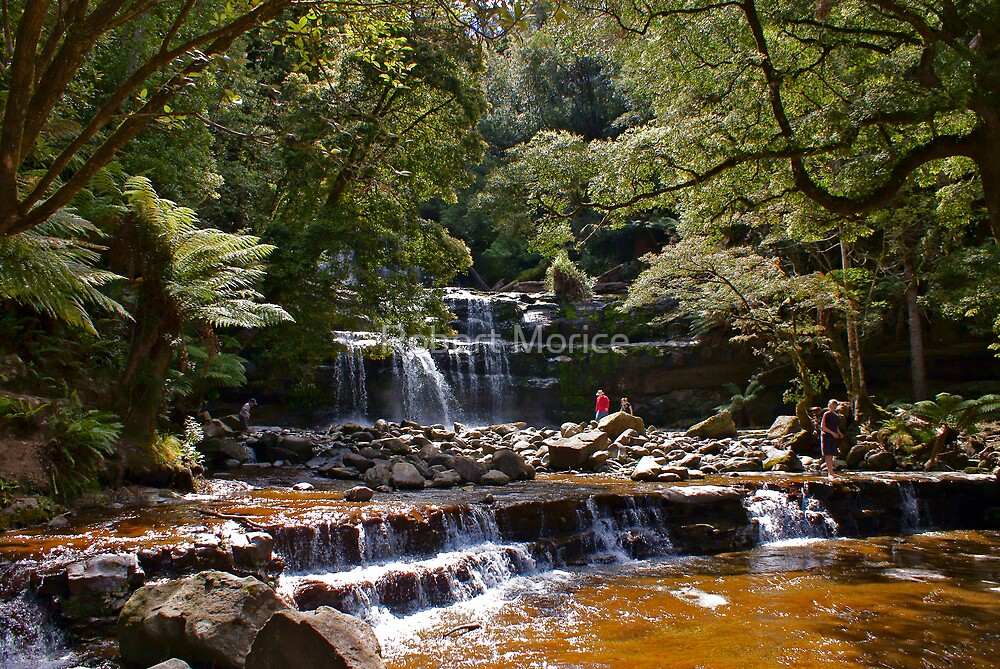 Liffey Falls in Tasmania by Robert Morice