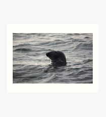 Moody seal Art Print