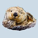 Sea Otter Who Me Surely not! by Dave  Knowles