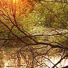 The Seasons (nature) by Rebecca Tun