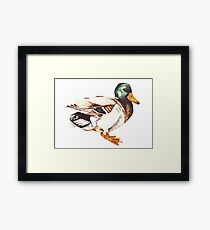 Watercolor Mallard Duck  Framed Print