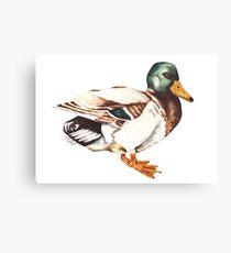 Watercolor Mallard Duck  Canvas Print