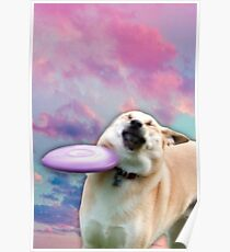 Frisbee Doge Poster