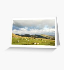 Sheep grazing in Peak District, England Greeting Card