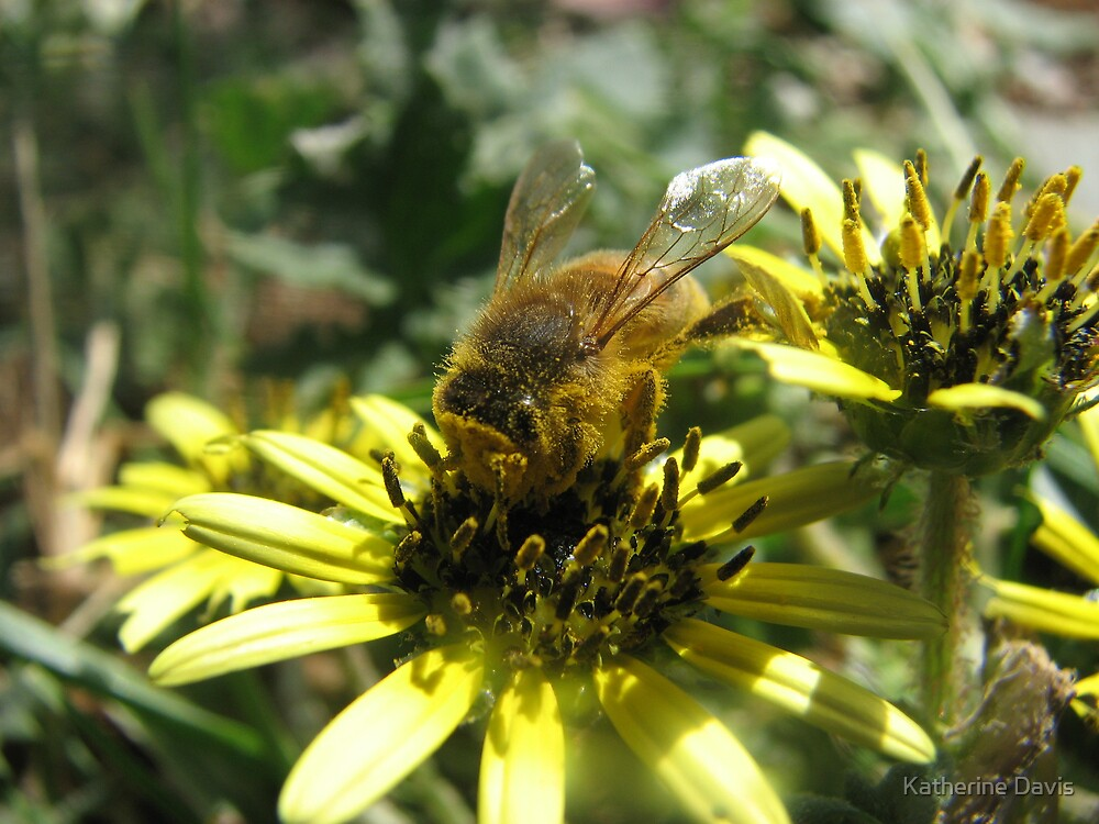 Bee by Katherine Davis