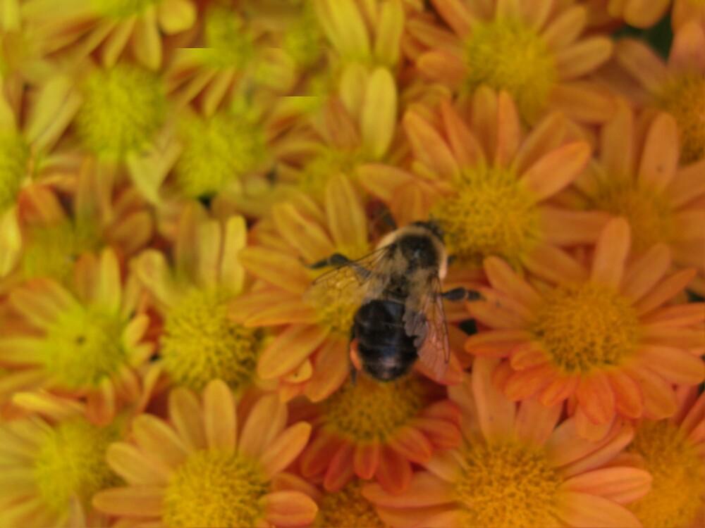 BEE by Spiritinme