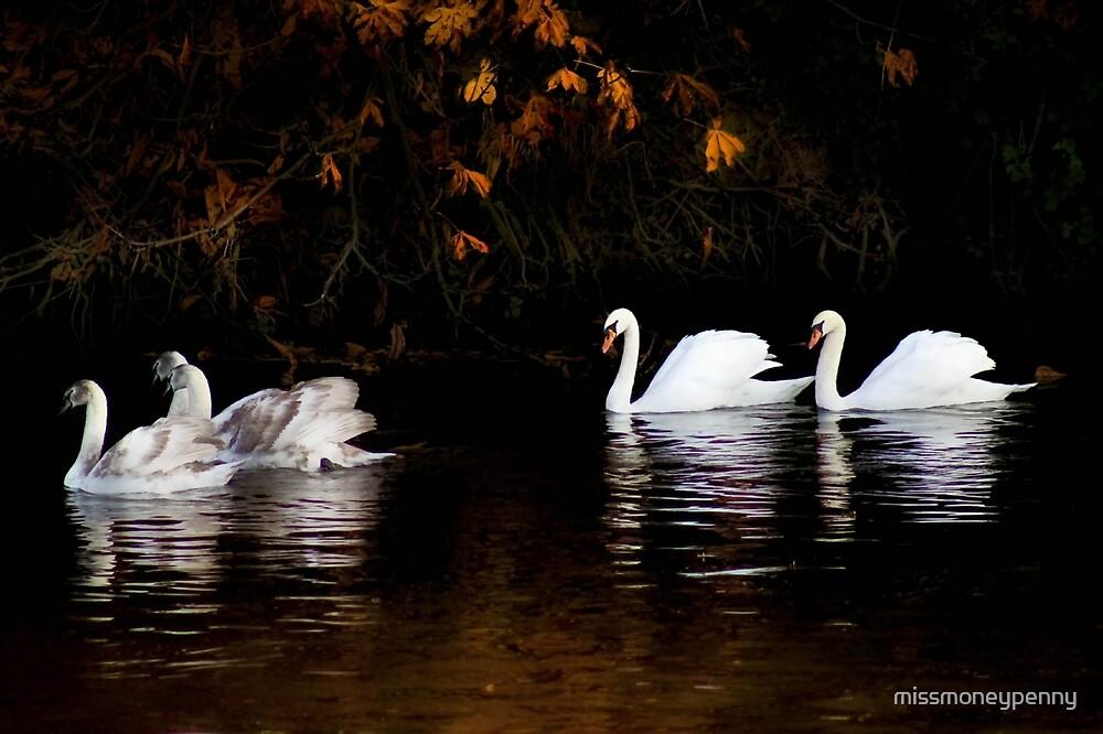Autumnal swans  by missmoneypenny