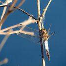 Dragonfly 2 by Kallian