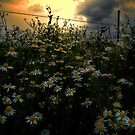 The Early Glow by Charles & Patricia   Harkins ~ Picture Oregon
