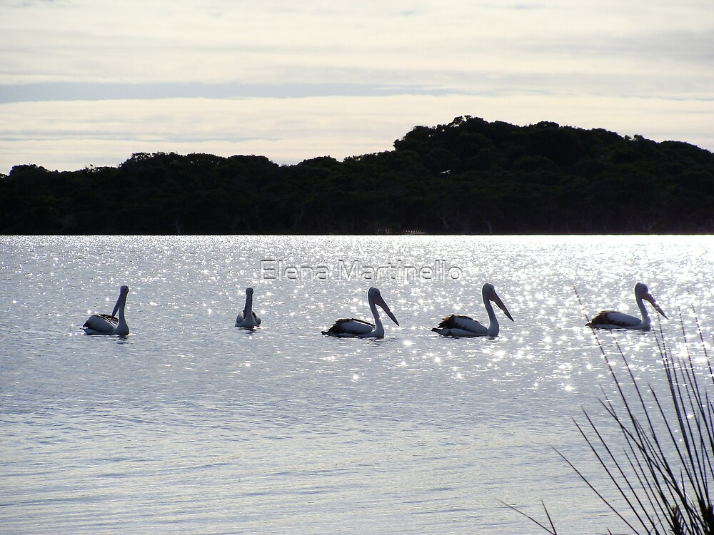 Pelicans in the Lagoon by Elena Martinello
