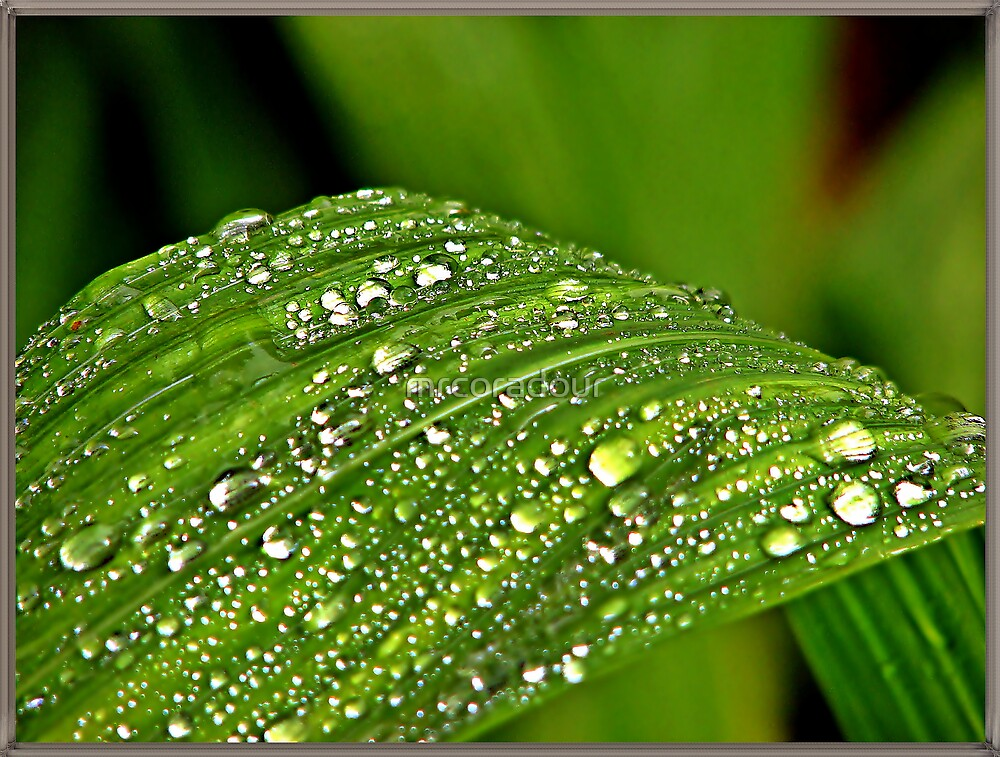 Droplets after rain. by Malcolm Chant