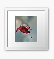 Ruby Raindrop Framed Print