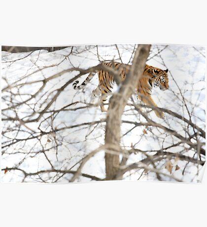 Winter Tiger Poster