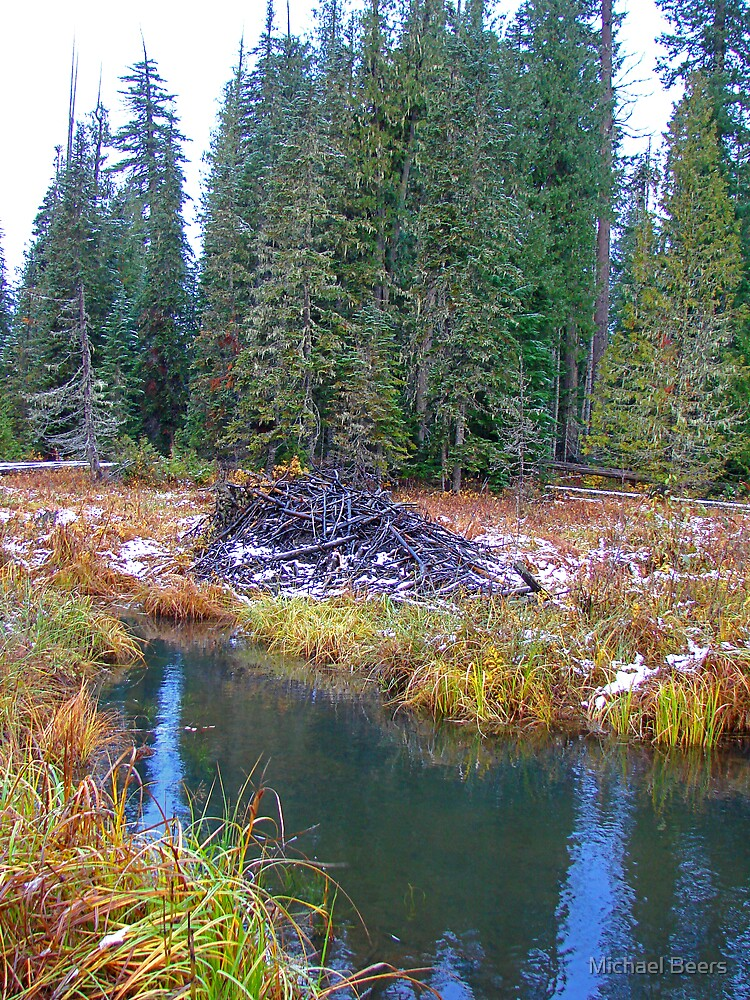 BEAVER LODGE NEAR MT by Michael Beers