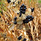 Wet Fall Berries by Donna R. Cole