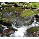 TN Water 2 by danabee