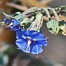 Blue in Dampier by Graeme  Hyde