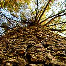Tree bark macro by Kallian