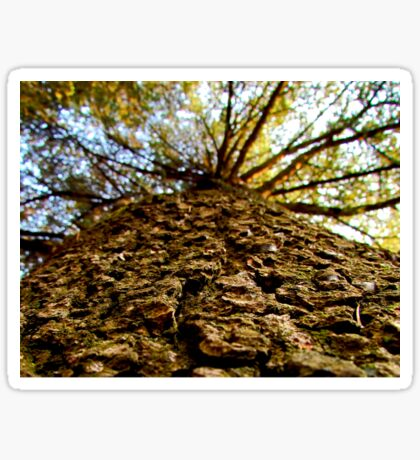 Tree bark macro Sticker