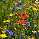 Wild Flowers At Lyme Gardens, Dorset. Uk by lynn carter