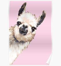 Sneaky Llama Poster