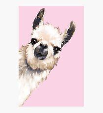 Sneaky Llama Photographic Print