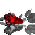 Red Rose by Xandru