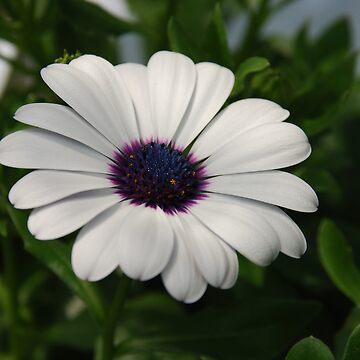 Daisy by 123alice1989