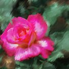 Double Delight Red Rose  by Don Wright