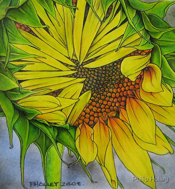 Sunflower! by Philip Holley