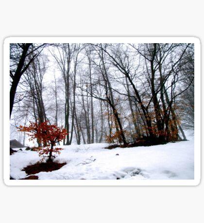 Winter Forest Sticker