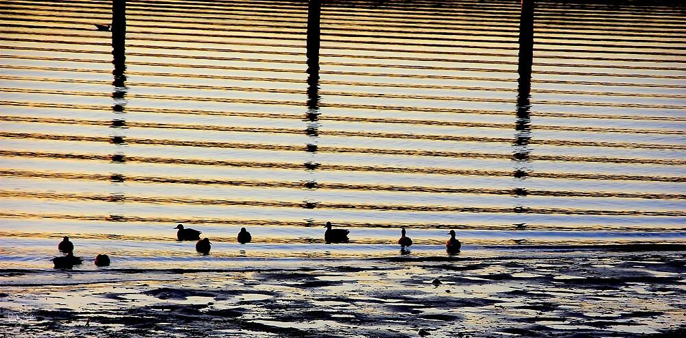 Sunrise Ducks by Rick Lawler