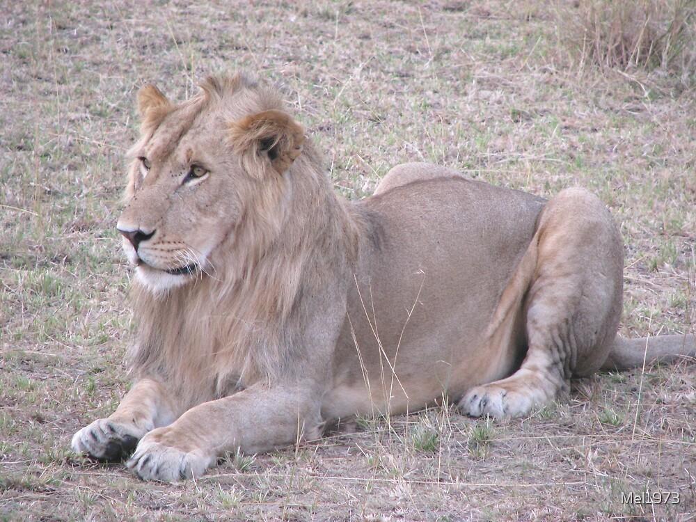 Lion in Masai Mara by Mel1973