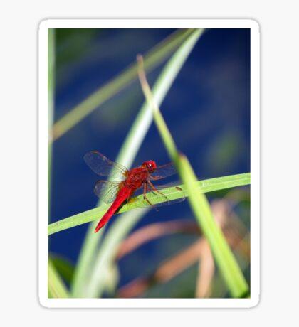 Dragonfly 1 Sticker