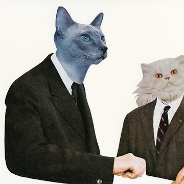 Cat Chat by Cassia