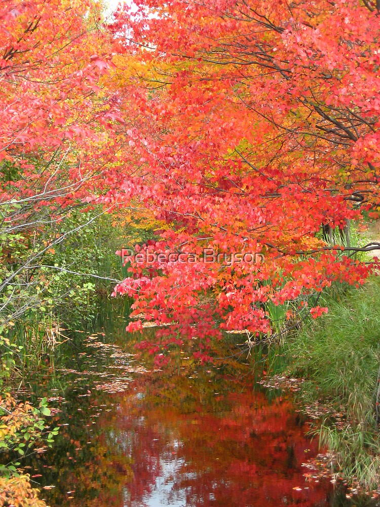 Peak Color at Otter River by Rebecca Bryson