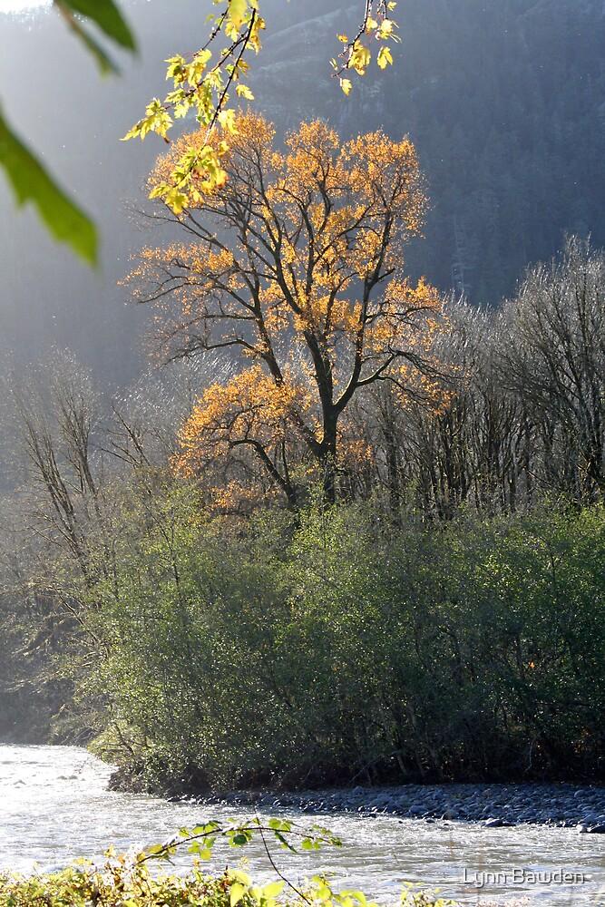 """""""Illuminated Cottonwood"""" by Lynn Bawden"""