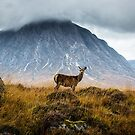 """Scottish Photography """"Glencoe Deer in Autumn"""" by zoghogg"""
