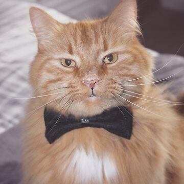 Cat with Bow Tie by UnoWho21
