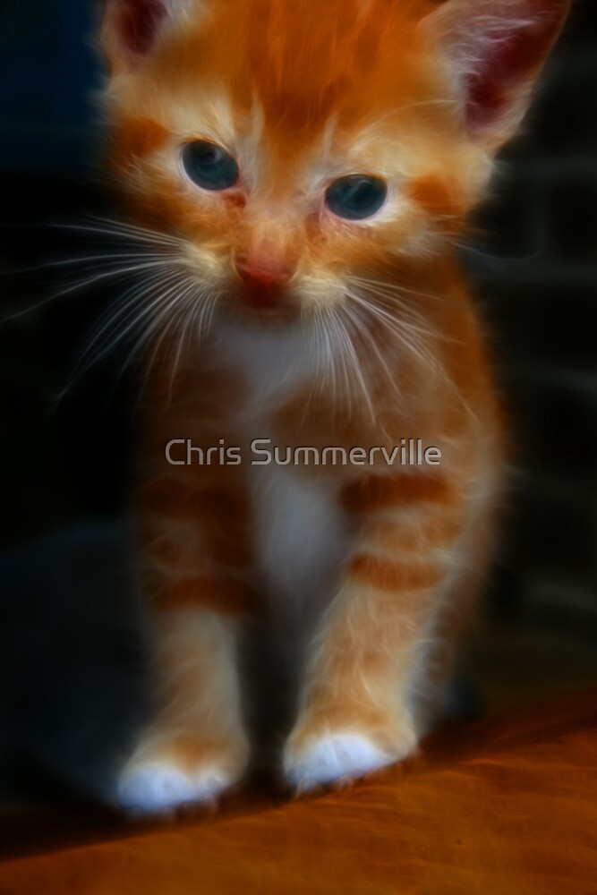 Kitten by Chris Summerville