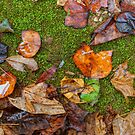 When November Comes 2 by Rodney Lee Williams